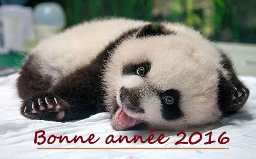 panda-smile-and-wa_3096631k.jpg